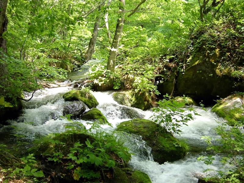 桃川~奥入瀬川の水で仕込んだ柔らかな味わい~桃川株式会社